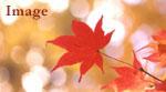 紅葉のイメージ画像