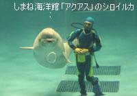 しまね海洋館「アクアス」