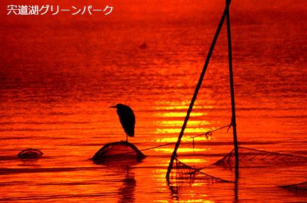 宍道湖グリーンパーク・野鳥