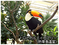 トロピカルエイビアリー(熱帯鳥温室)