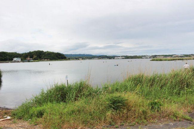 大和しじみが生息する出雲の神西湖
