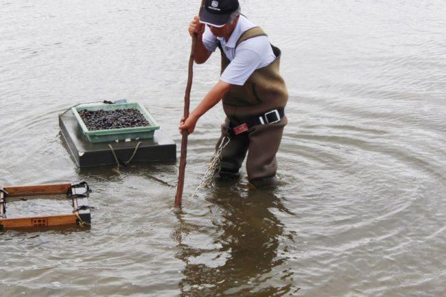 神西湖のしじみ漁の様子