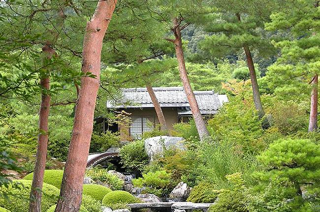 庭園の赤松