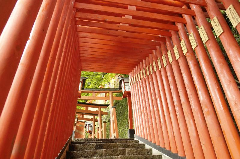 太鼓谷稲荷神社の約1,000本の鳥居