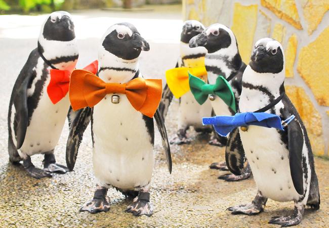 松江フォーゲルパークのペンギン