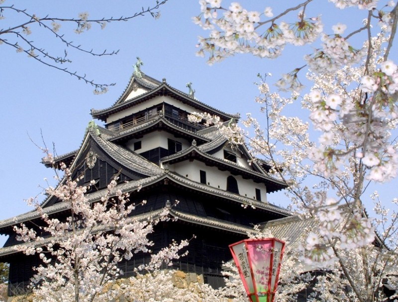 MatsueCastle in Spring