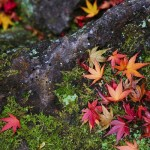 Autumn Events in Shimane 2017
