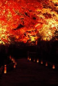 Night light up (Nov, Dec.)