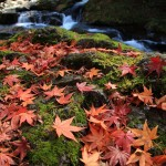 Recommended Fall Color Spots in Shimane