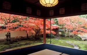 adachi museum of art autumn