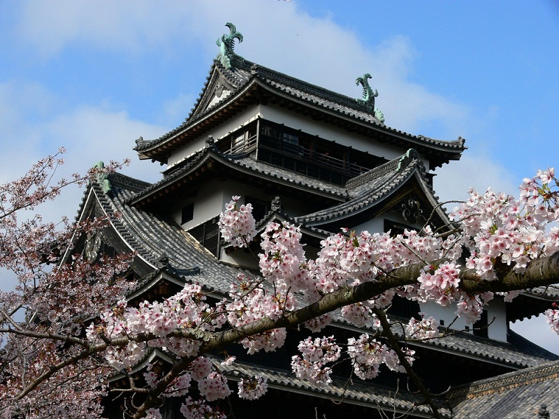 Matsue Castle cherry blossoms