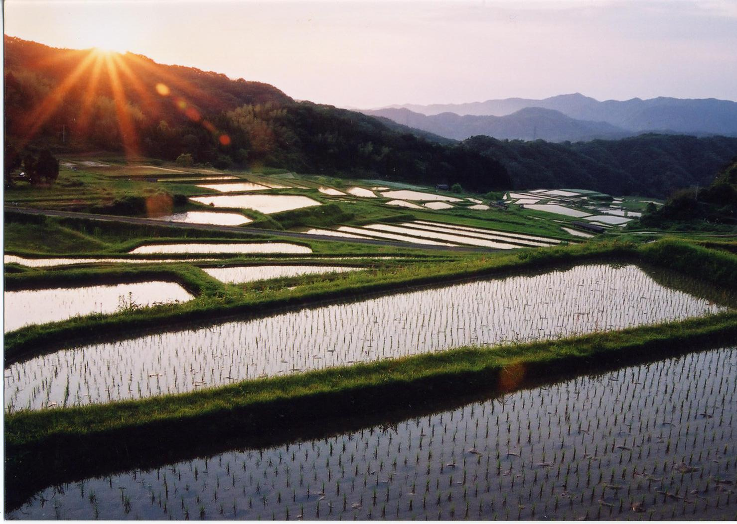rice fields in unnan