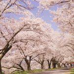 Spring Festivals in Shimane 2017