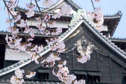 Matsue Castle from under the sakura trees