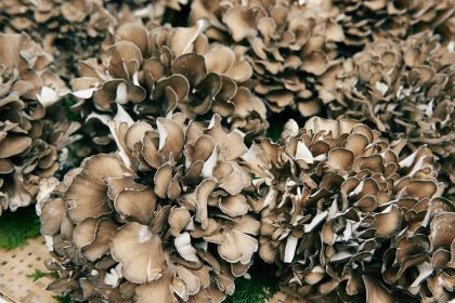 maitake-mushrooms