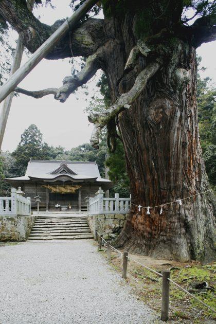 tamawakasujinjya