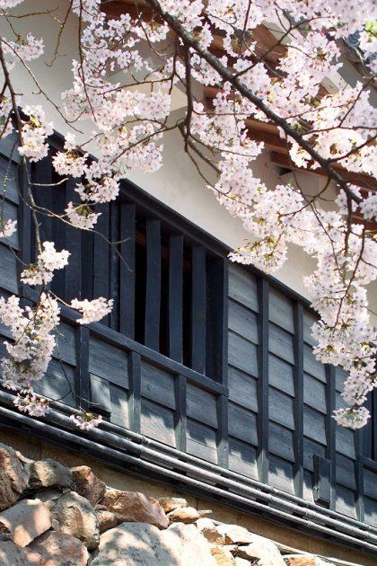 Matsue Castle Spring