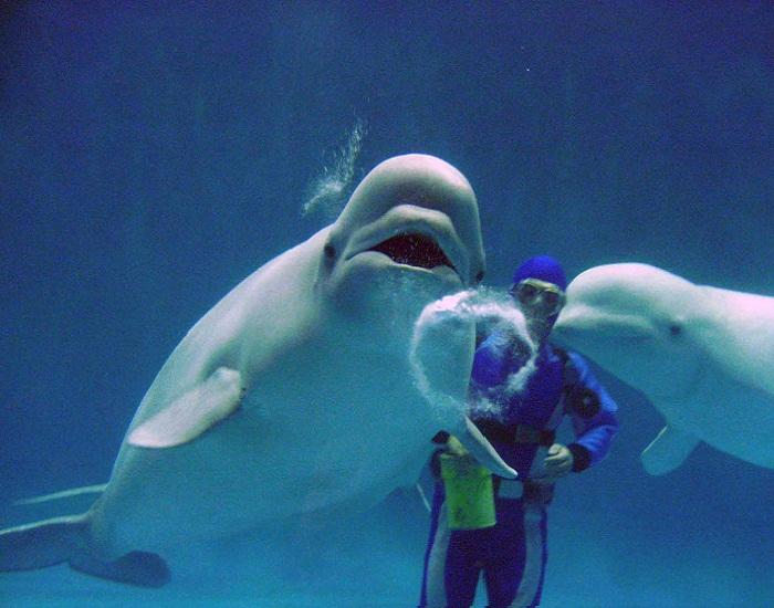 L'aquarium AQUAS