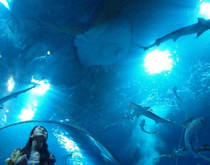 Tunnel sous-marin d'AQUAS
