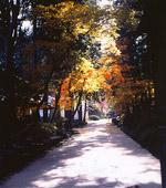 絲原記念館庭園(奥出雲町)