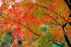 島根県の紅葉