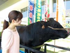 牛突きの横綱牛