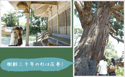 樹齢二千年の杉は圧巻!
