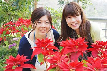 花*花街道の山陰旅