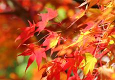 島根の紅葉スポット情報