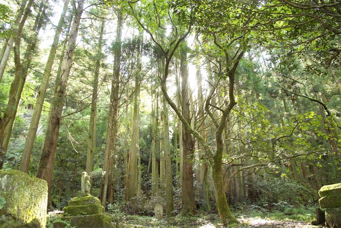 正覚山大安寺の境内