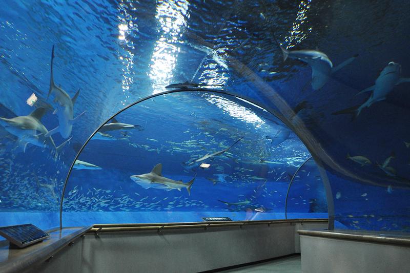アクアスのサメ