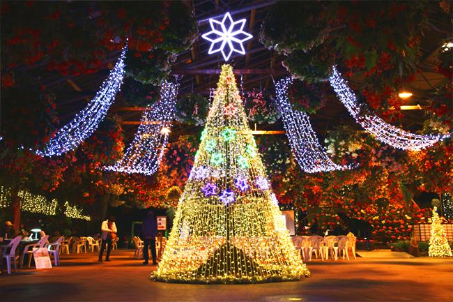 松江フォーゲルパーク X'mas ナイトフェスティバル