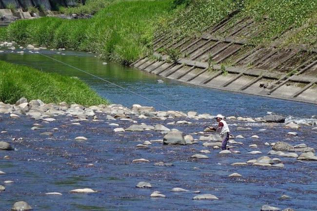 高津川の鮎釣り