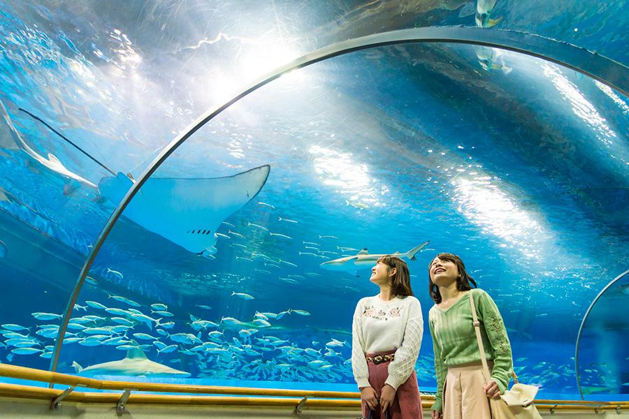 しまね海洋館 AQUASアクアス