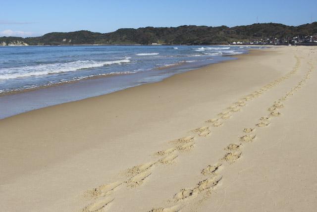 鳴砂の浜 琴ヶ浜