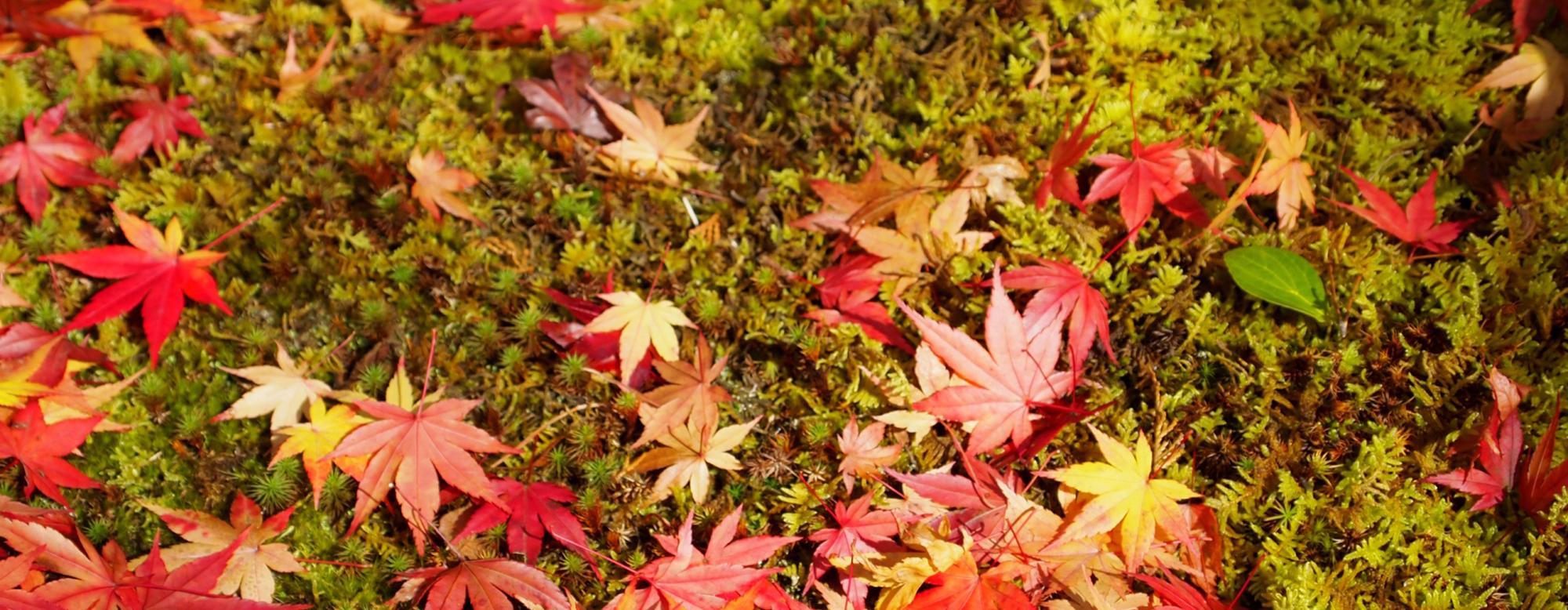 島根の紅葉