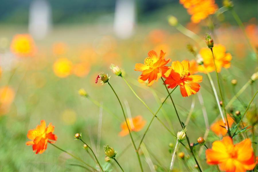 季節の花を楽しもう!島根の花名所・見頃情報